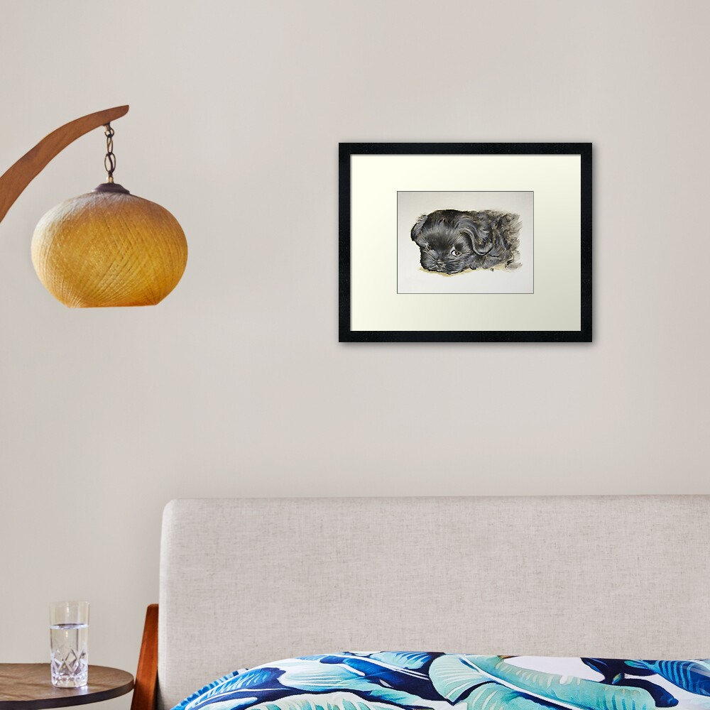 Black Shih Tzu Puppy Framed Art Print