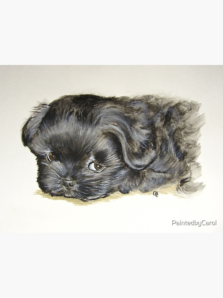 Black Shih Tzu Puppy by PaintedbyCarol