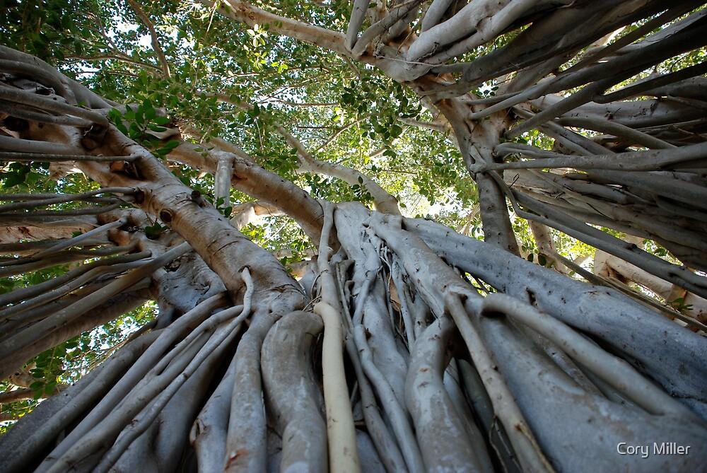 Banyan Tree, Hawaii by Cory Miller