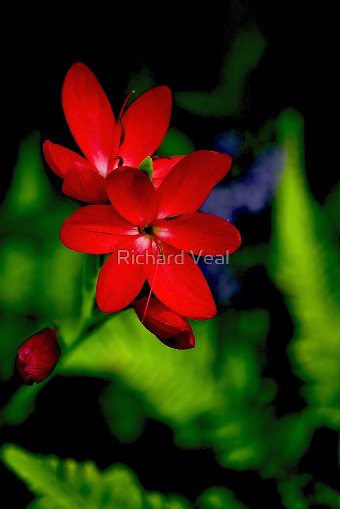 Red Flowers by kcphotography
