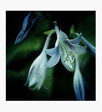 cladis Photographic Print