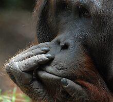Contemplating by Peter Ellen