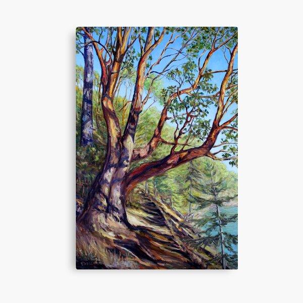 Storytelling Arbutus Tree Bennett Bay Mayne Island BC Canvas Print