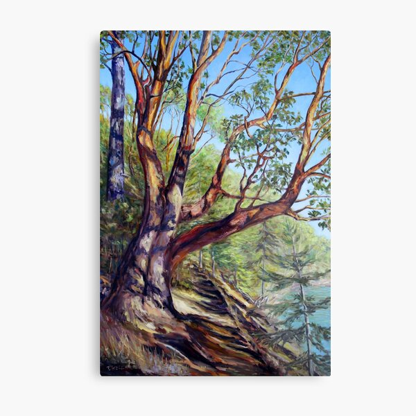 Storytelling Arbutus Tree Bennett Bay Mayne Island BC Metal Print
