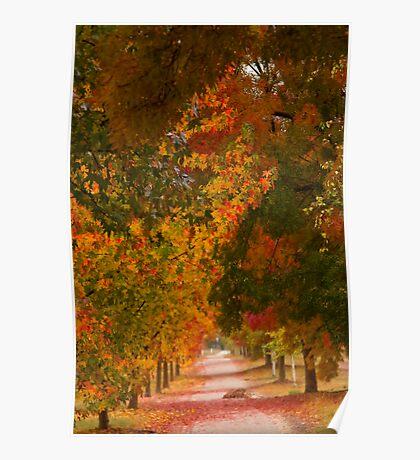 Bright Path Poster