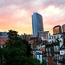 My Backyard Sunset by Alison Cornford-Matheson