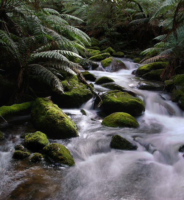 Taggerty River by Matt Bishop