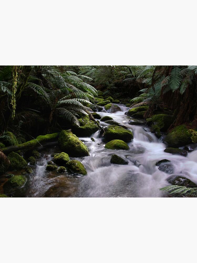 Taggerty River by alexsupertramp