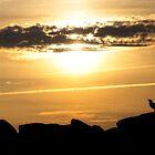 Möwe bei Sonnenuntergang von Manon Boily