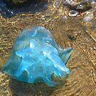 Jellyfish 4 by NomadicGoddess