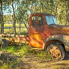 Old Timer by Pauline Tims