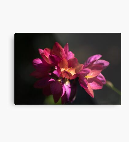 Flowers of Red and Pink Metal Print