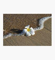 Plumeria Flower Sand Print Photographic Print