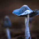 Macro Blue Fungi by Clare Colins