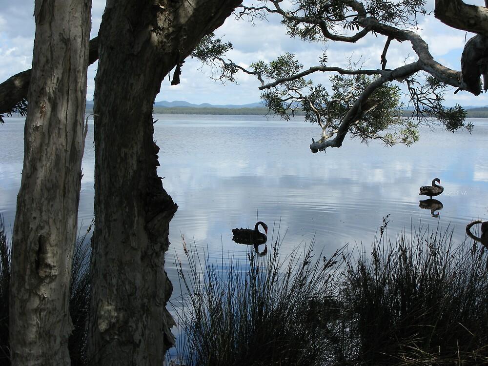 Myall Lakes, NSW, Australia. by SkyPhotos