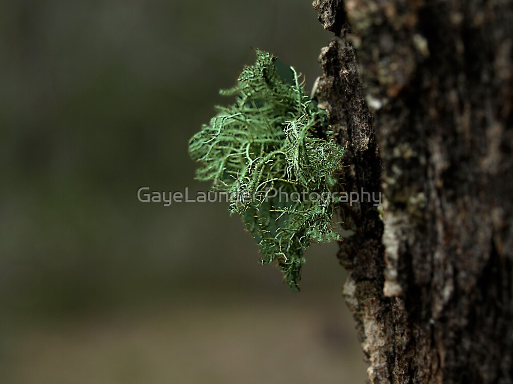 Attached by GayeLaunder Photography