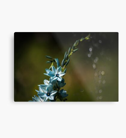 Blue Flowers really do Exist! Metal Print