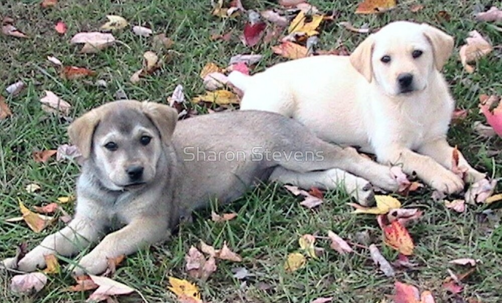 Gorgeous Puppies by Sharon Stevens
