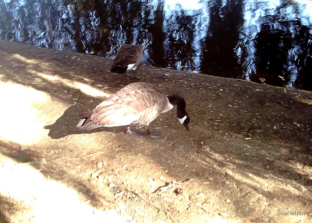Geese in London by jeanemm