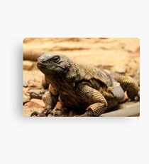 Look it's a lizard! Canvas Print