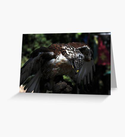Ferruginous Hawk 2 Greeting Card