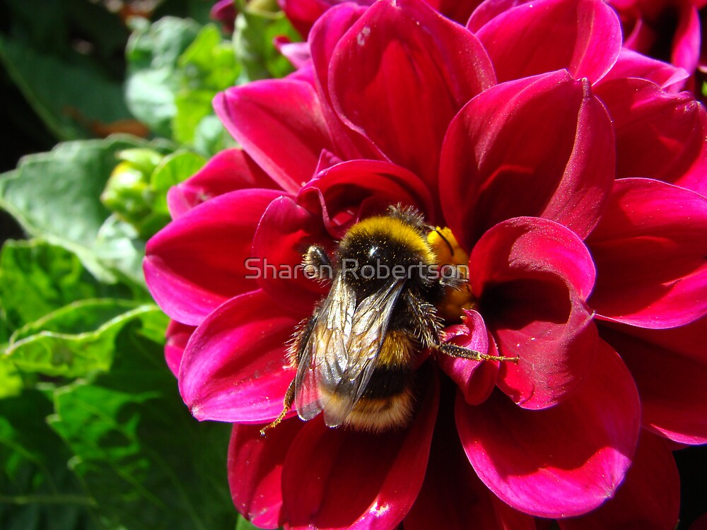 I'm here Honey! by Sharon Robertson