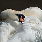 Swan by AnnDixon