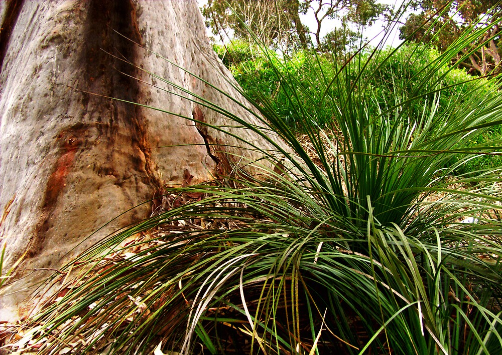 tree trunk and grass by adam pearson