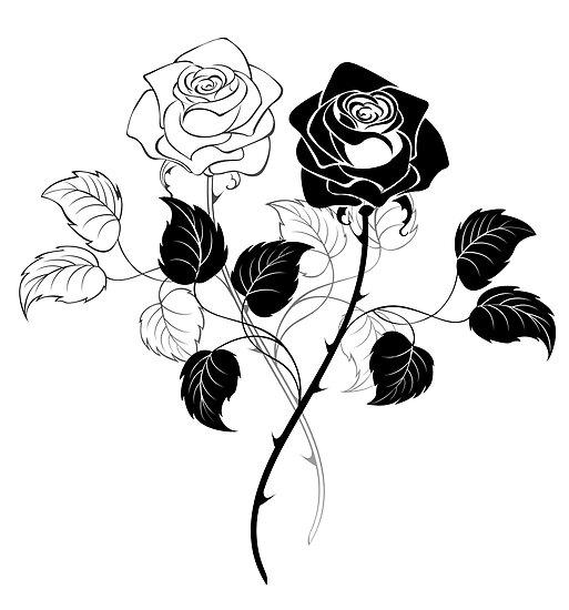 Pósters Dos Rosas Blanco Y Negro De Blackmoon9 Redbubble