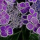 Colour me Purple  by Trevor Kersley
