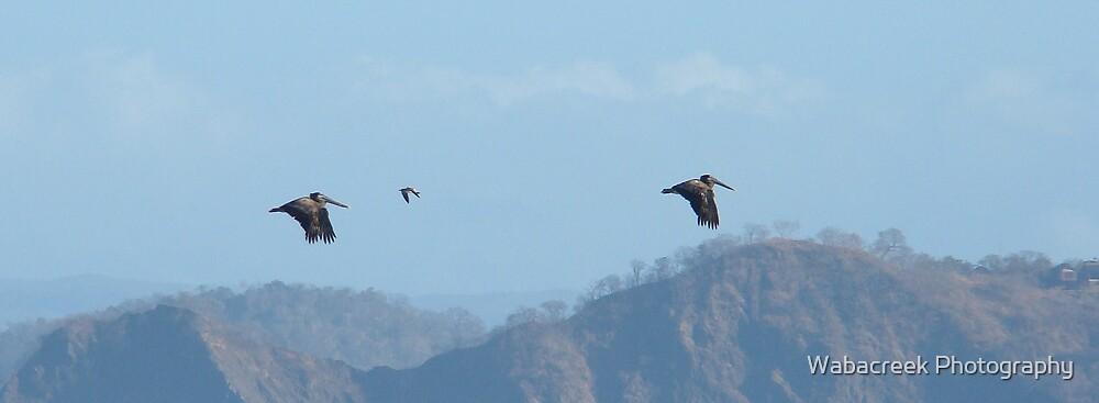 Flying Duo by Jocelyne Phillips