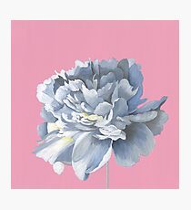 White Peony on Pastel Pink  Photographic Print