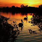 Pelicans Two by engride