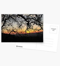 Sunset Through The Trees Postkarten