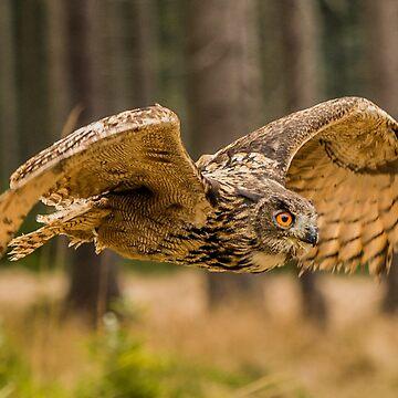 Western Siberian Eagle Owl by AliusImago