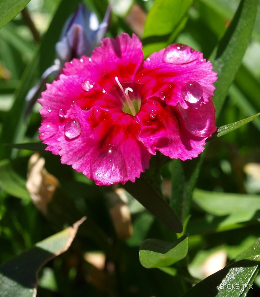 Pink Flower by BrOkEnPiX