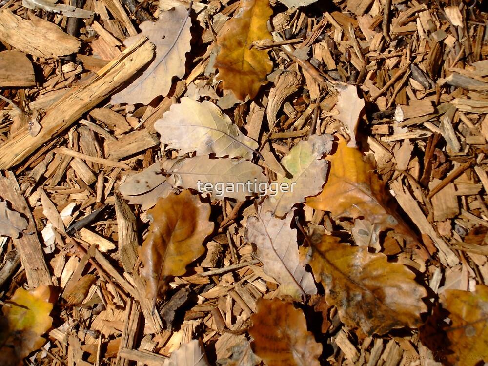 Autumn Leaves by tegantigger