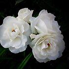Four roses by Ana Belaj