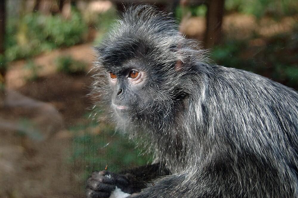 Monkey by Stan Daniels