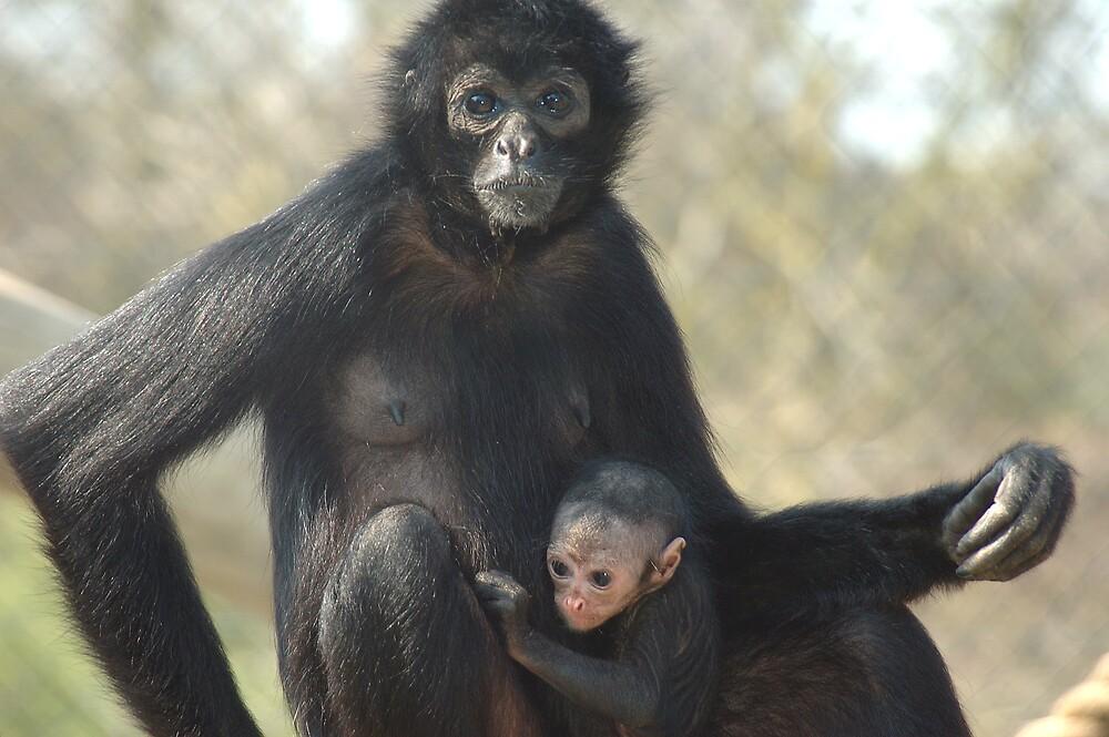 Mother & Baby monkey by Stan Daniels