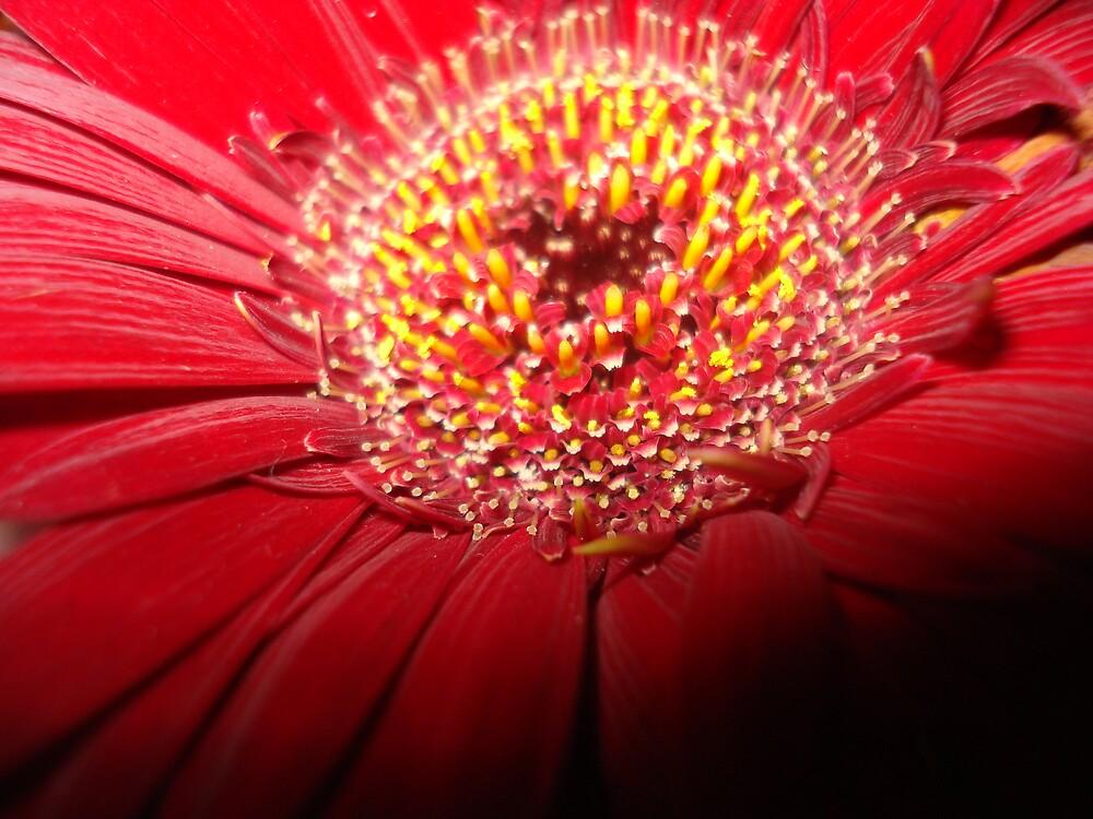 Bloom by rebagrace