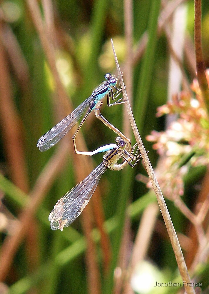 damsels in love! by Jonathan France