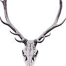 Skull of deer with antlers 3D by VioletaOrts