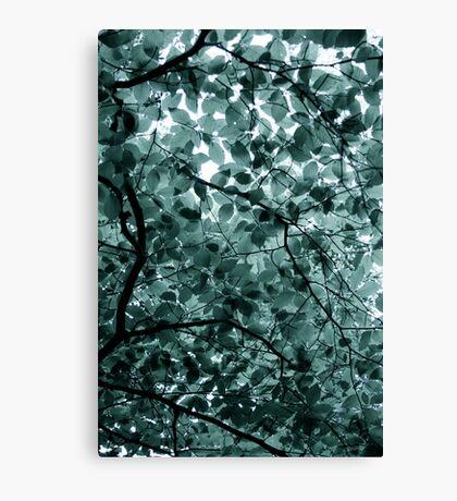 Blue Beech. Canvas Print