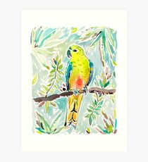 Cutie the Orange-bellied Parrot by Barbra Ignatiev Art Print