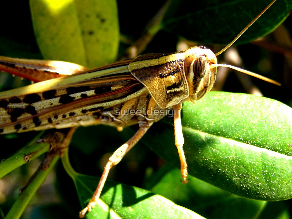 Grasshopper by sweetdesign