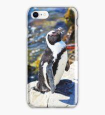 Pinguin in Südafrika iPhone Case/Skin
