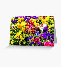 Viola Tricolor Pansy Flowers Greeting Card