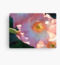 Sword lily Canvas Print