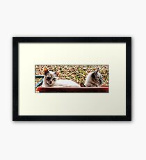 Hey Bro We May Not Be Alone Framed Print